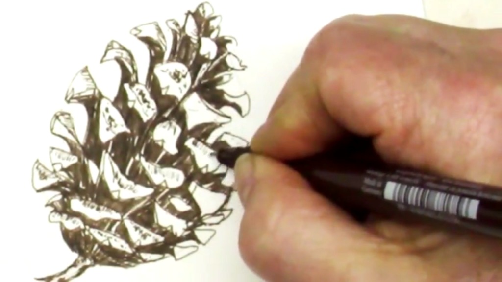 Hand drawing pinecone in ink